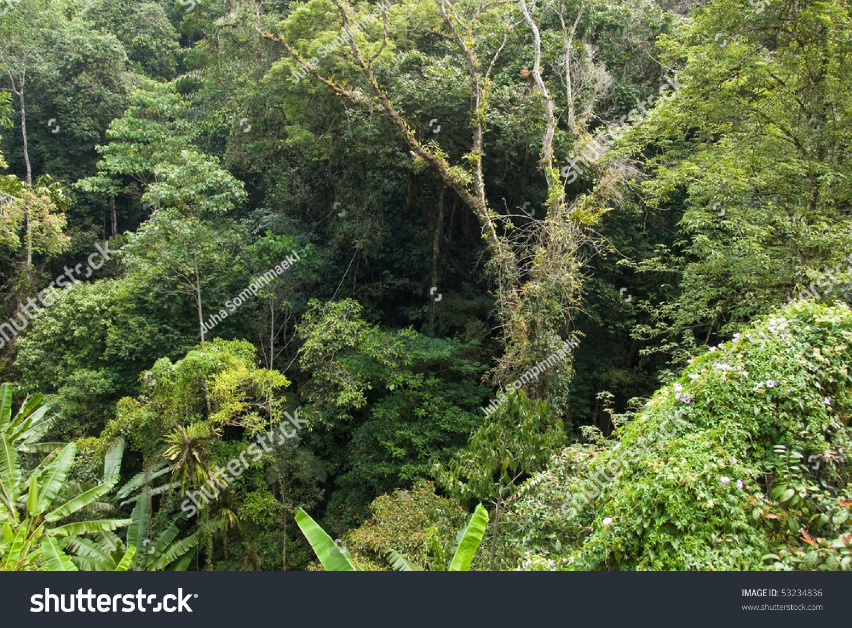 Lush Jungle Foliage Stock Photo (Edit Now) 53234836