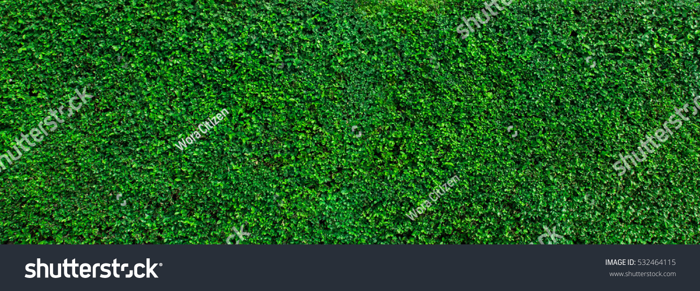 green grass wall texture backdrop design stock photo edit now