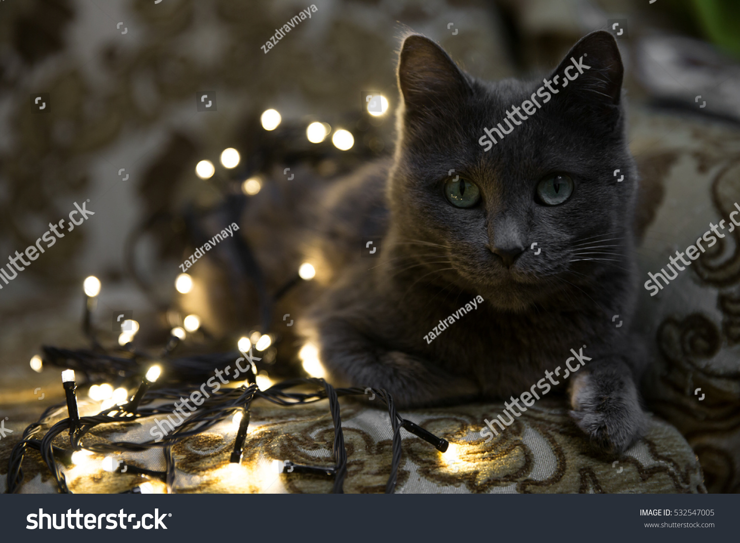 grey cat with christmas lights lying in chair and watching closely on christmas tree decoration process