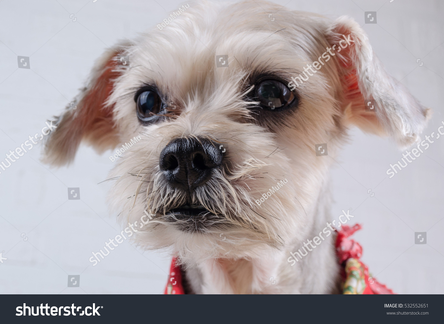 Cute Short Hair Mixed Breed Puppy Stock Photo Edit Now 532552651