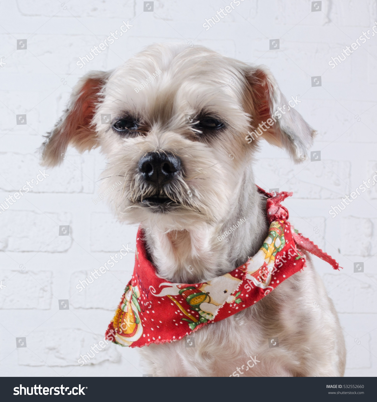 Cute Short Hair Mixed Breed Puppy Stock Photo Edit Now 532552660