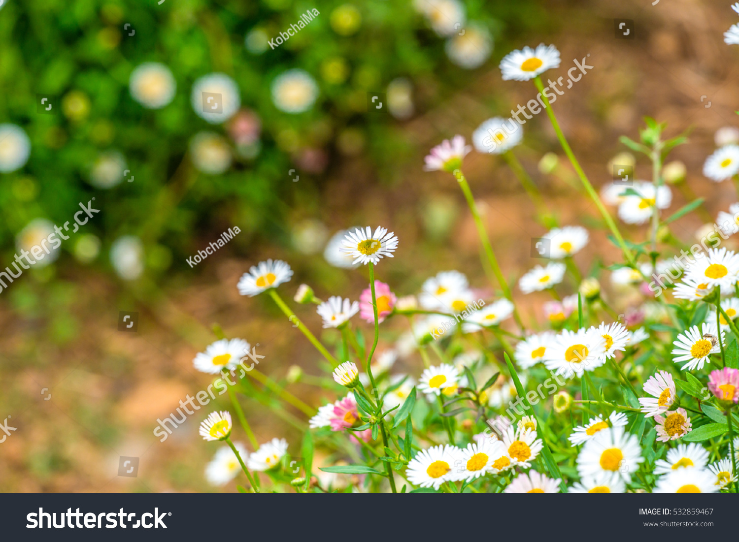 Little white flowers in the park thailand ez canvas id 532859467 izmirmasajfo