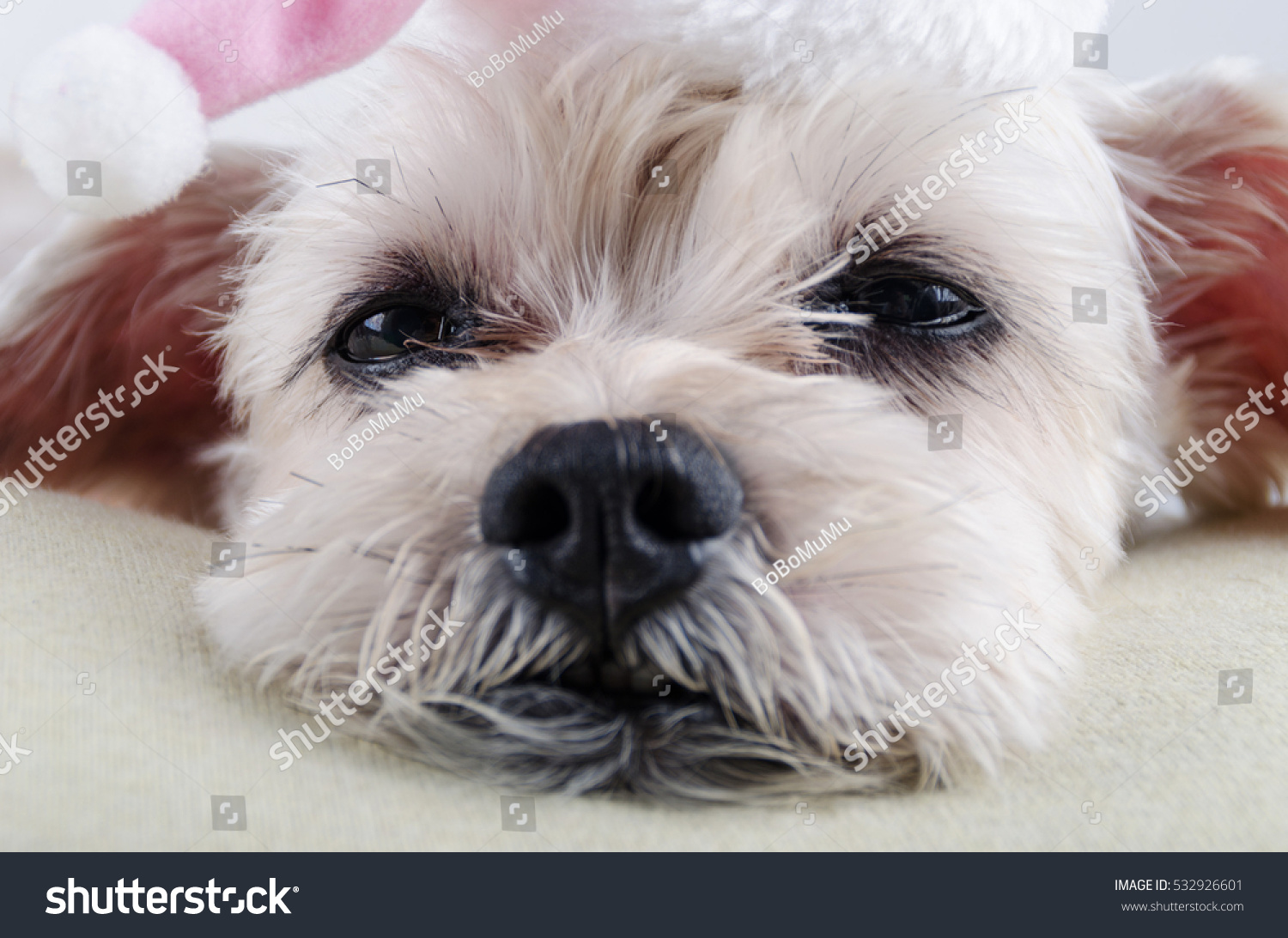 Cute Short Hair Mixed Breed Puppy Stock Photo Edit Now 532926601