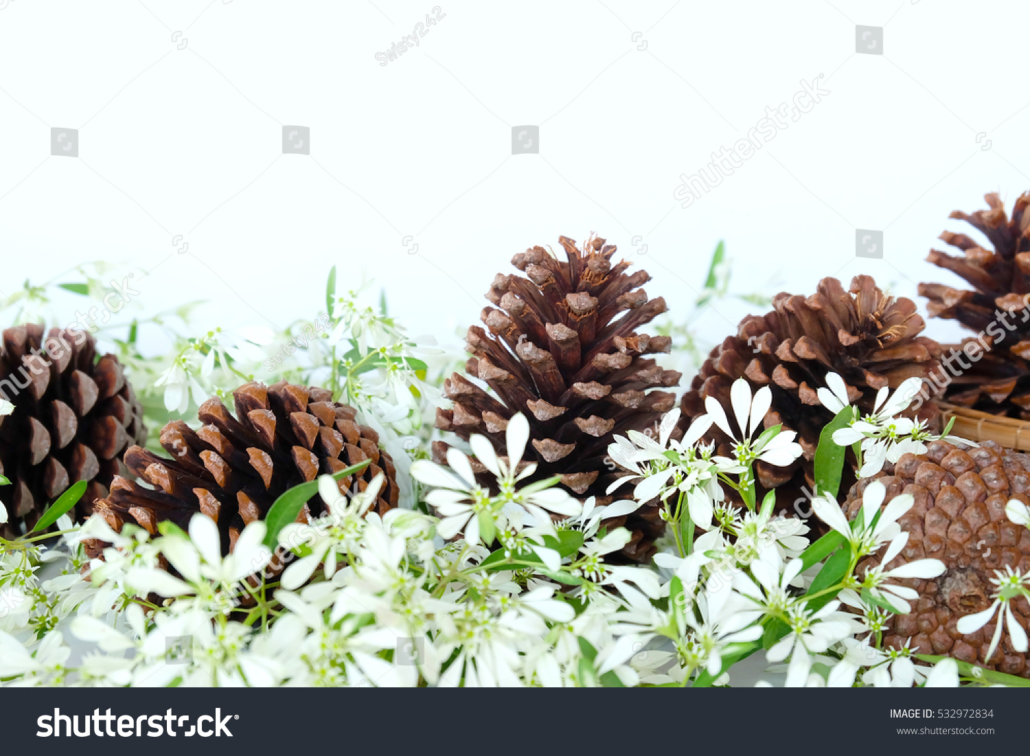 Pine Cones White Christmas Flower Background Stock Photo Edit Now