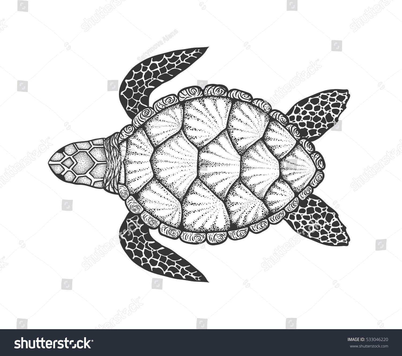 sea turtle line art style hand stock vector 533046220 shutterstock
