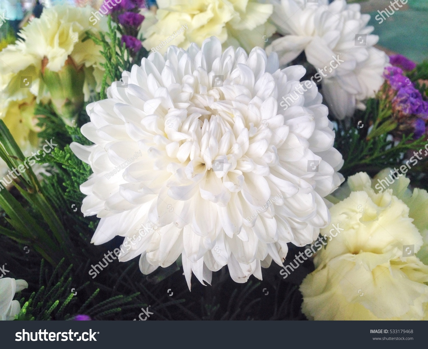 Artificial White Carnation Flower From Top View Ez Canvas