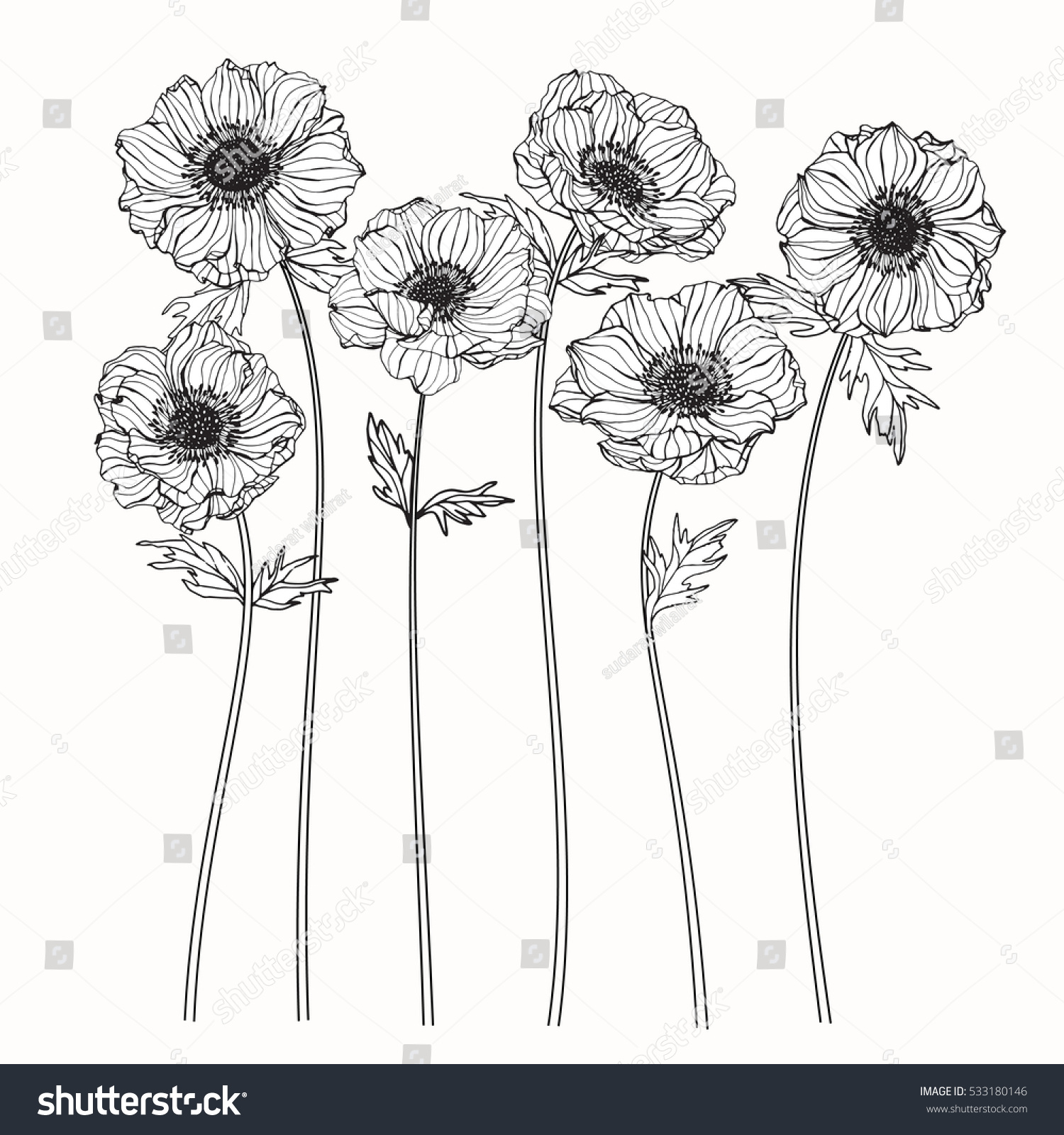 Anemone Flower Line Drawing : Drawing anemone flower on white backgrounds stock vector