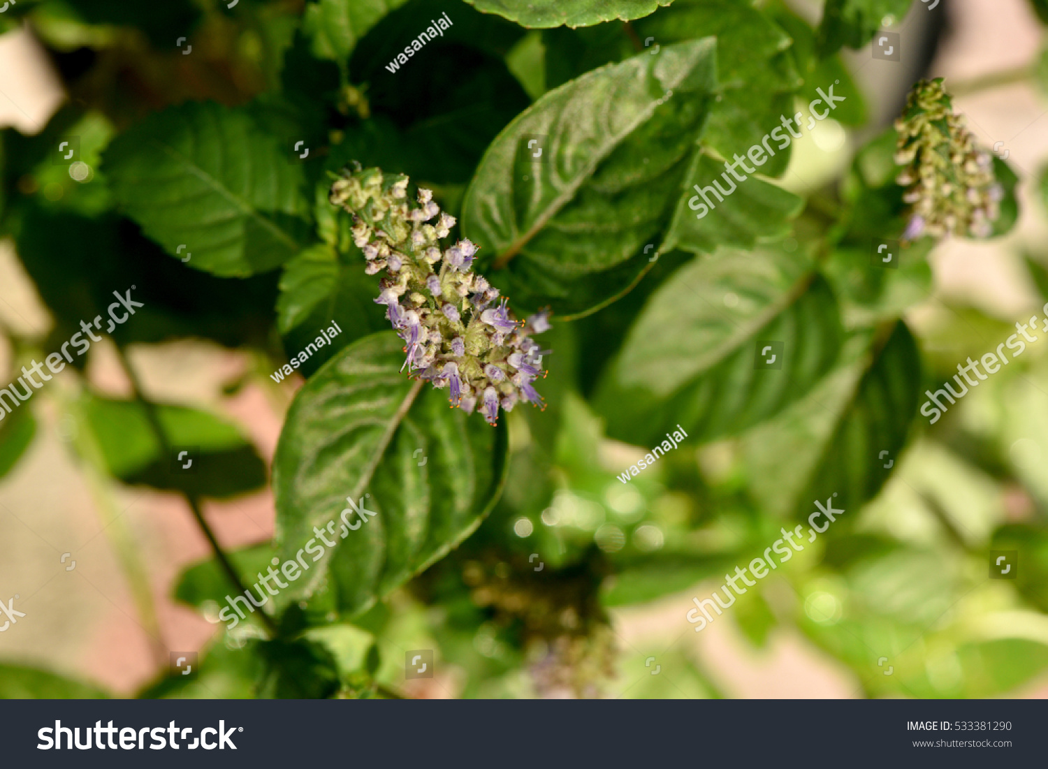 Natural Way To Get Rid Of Aphids On Basil