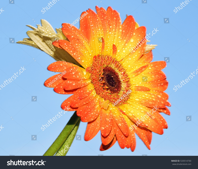 summer flower retro sunshine - photo #2