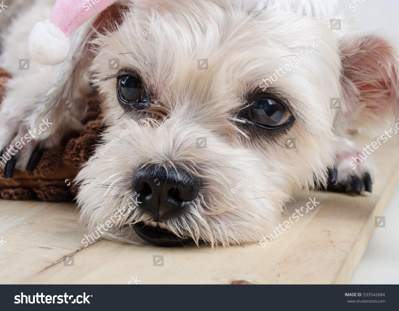 Cute Short Hair Mixed Breed Puppy Stock Photo Royalty Free