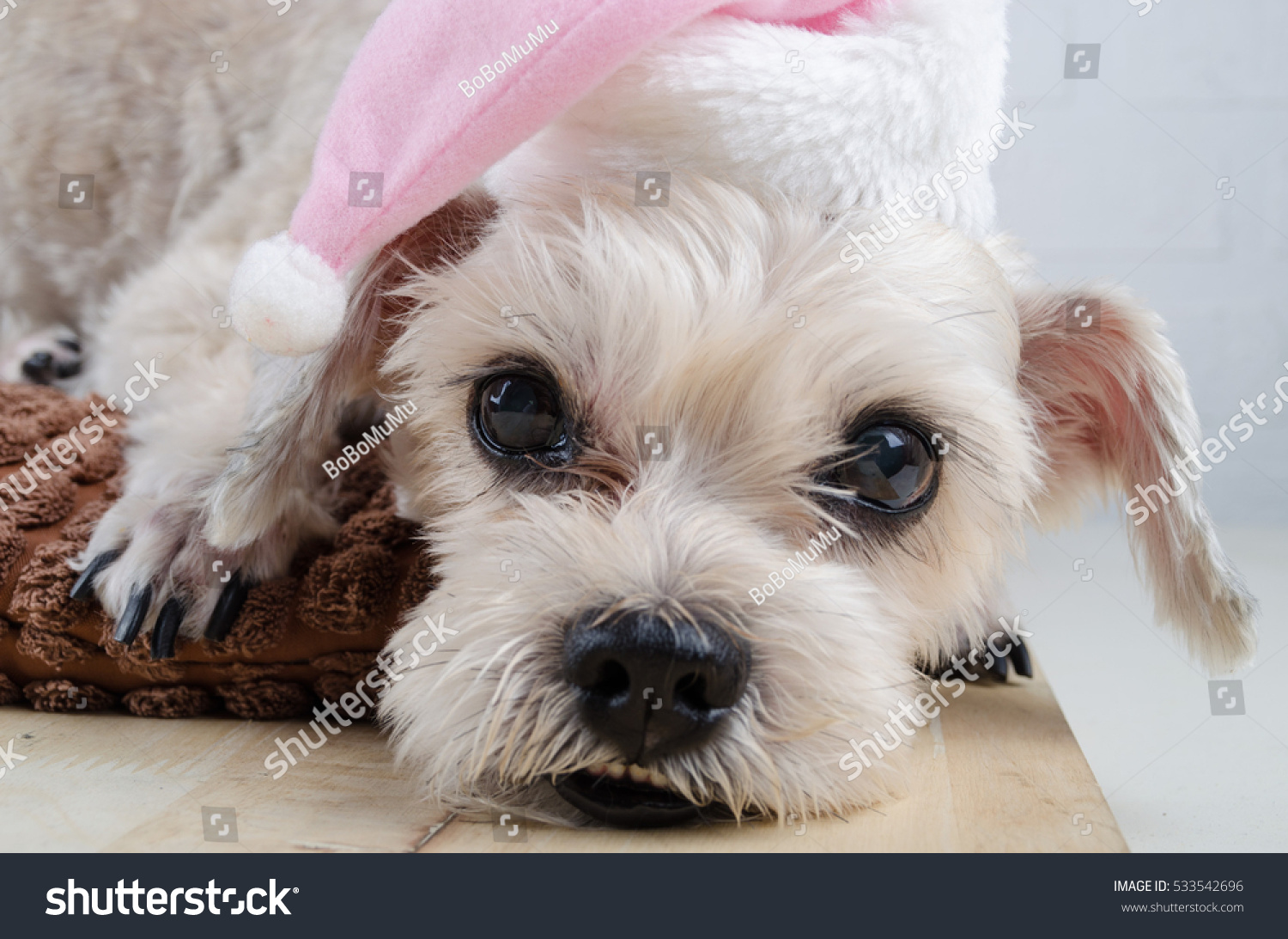 Cute Short Hair Mixed Breed Puppy Stock Photo Download Now