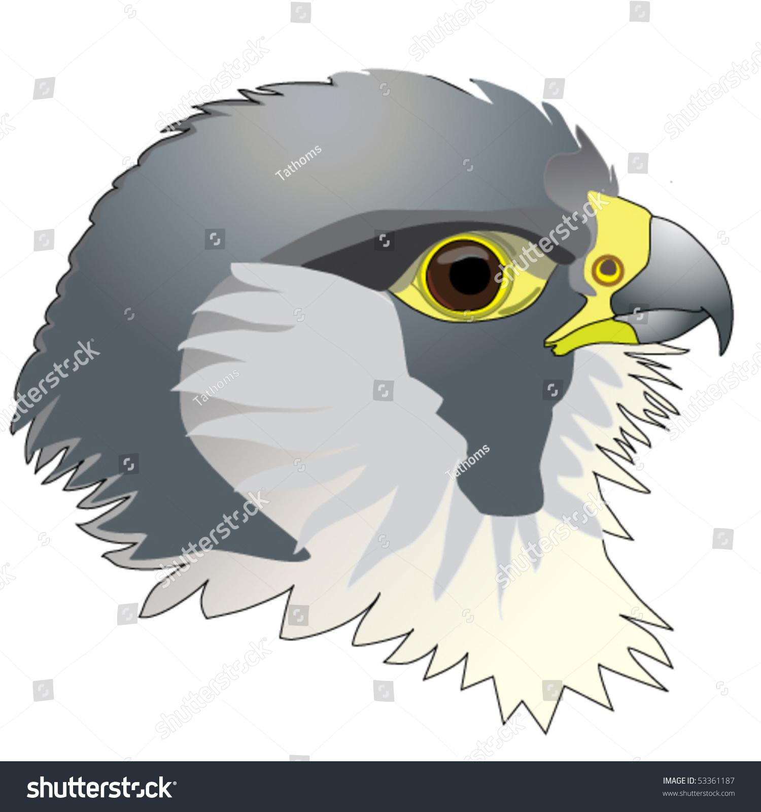 stock-vector-falcon-peregrine-falcon-hea