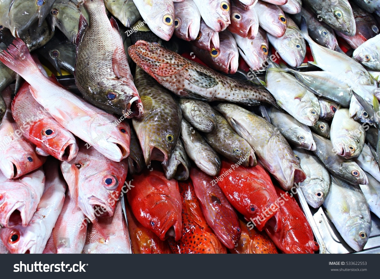 Colorful Exotic Tropical Fish Ocean Seafood Stock Photo (Royalty ...