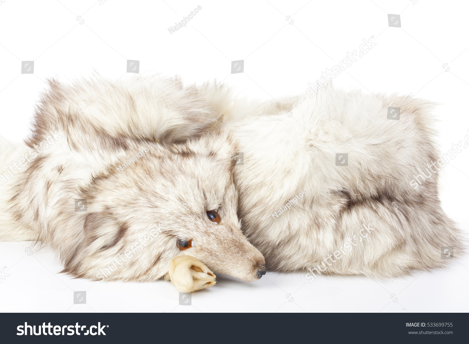 killing animals for fur 31 million animals are raised and killed on fur farms each year mink account for  26 million, fox 41 million chinchillas, racoon dogs (not to be confused with the.