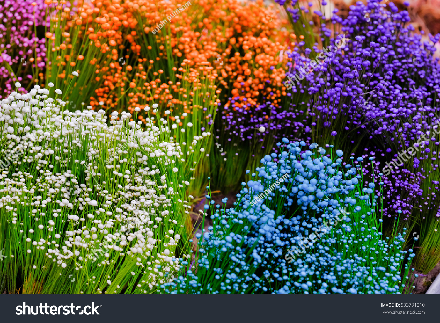 Close Colorful Small Grass Flower Background Stock Photo Edit Now
