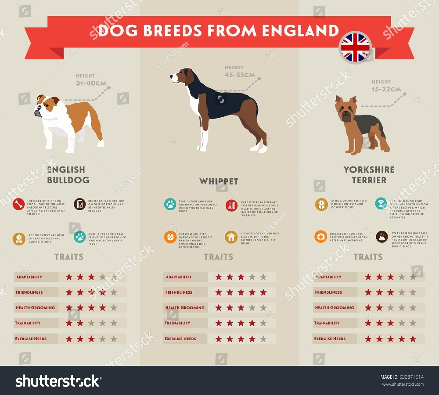 Dog infographic illustration vector icons set stock vector dog infographic illustration vector icons set english bulldog whippet yorkshire terrier nvjuhfo Image collections