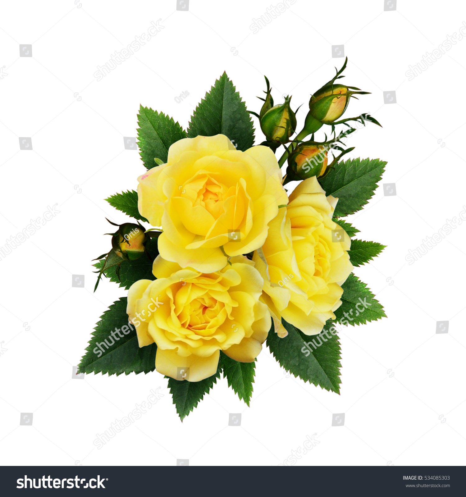 Yellow Rose Flowers Arrangement Isolated On Stock Photo Edit Now