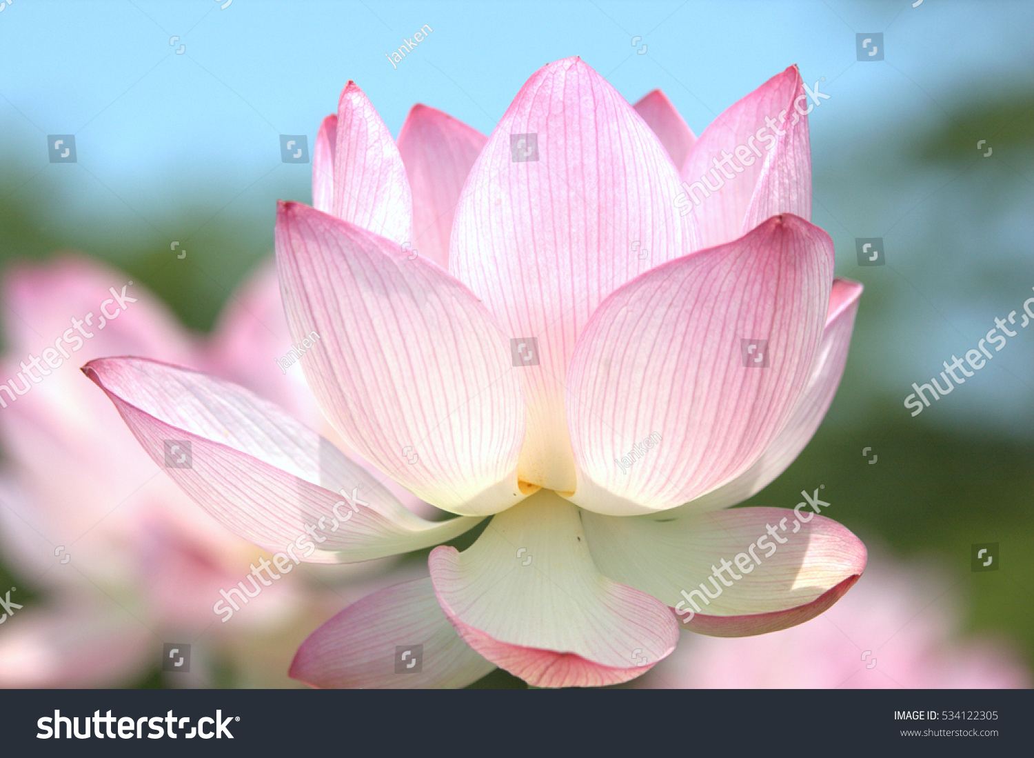 The Flowers Of A Lotus Ez Canvas