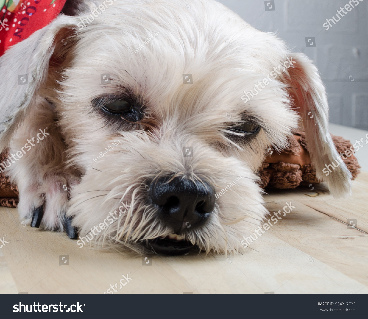 Cute Short Hair Mixed Breed Puppy Stock Photo Edit Now 534217723