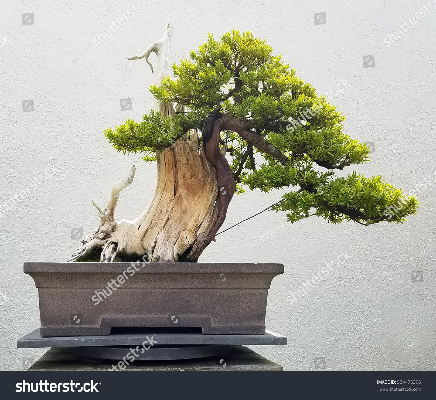 Bonsai Penjing Landscape Miniature Pine Tree Stock Photo Edit Now Wiring Yew And With In A Tray