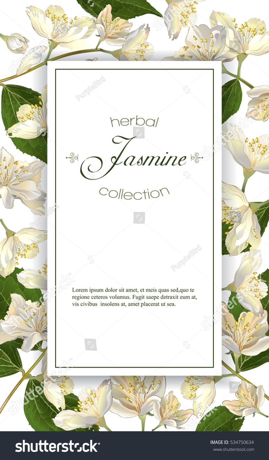 Vector Elegant Jasmine Flower Vertical Frame Stock Vector (2018 ...