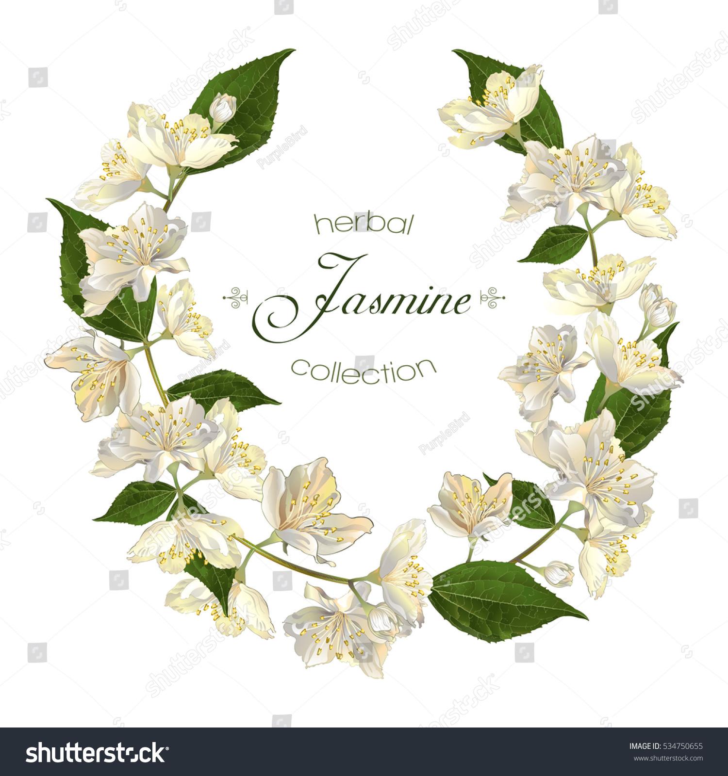 Vector round frame with pink flowers on white background in pastel - Vector Elegant Jasmine Flower Round Frame On White Background Design For Herbal Tea Health