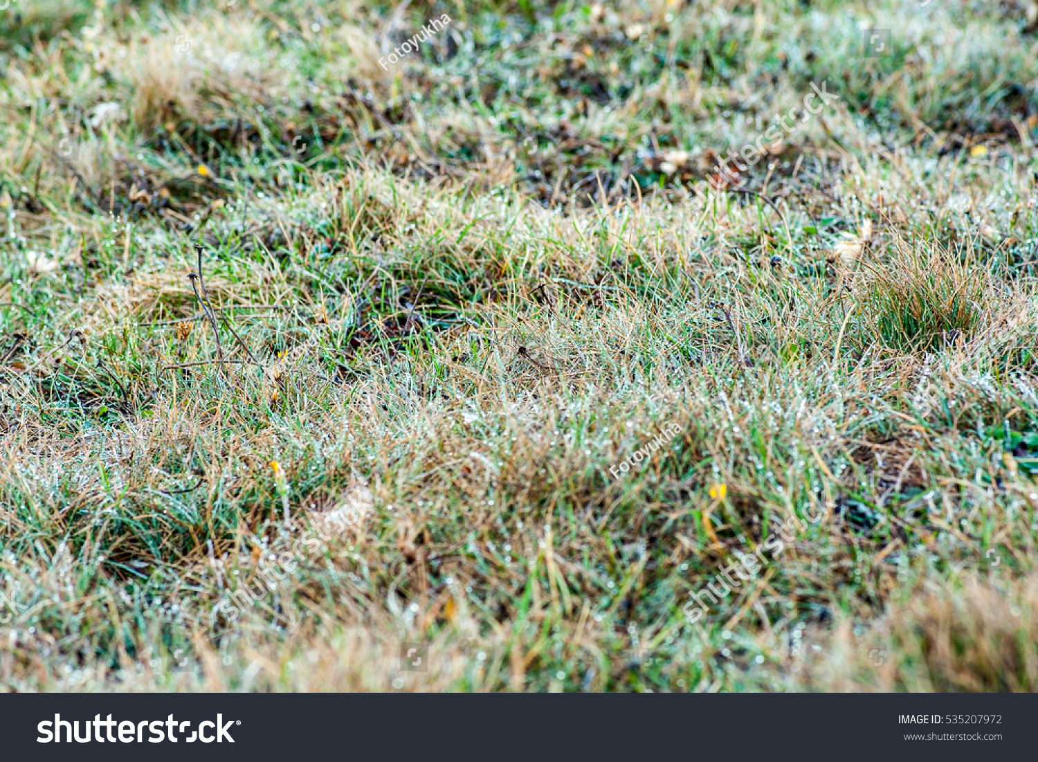 dry grass field background. Dry Grass Field. Autumn Background With A Field