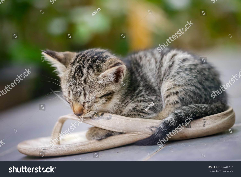 Cute Kitten Sleeping Sandal Stock Shutterstock