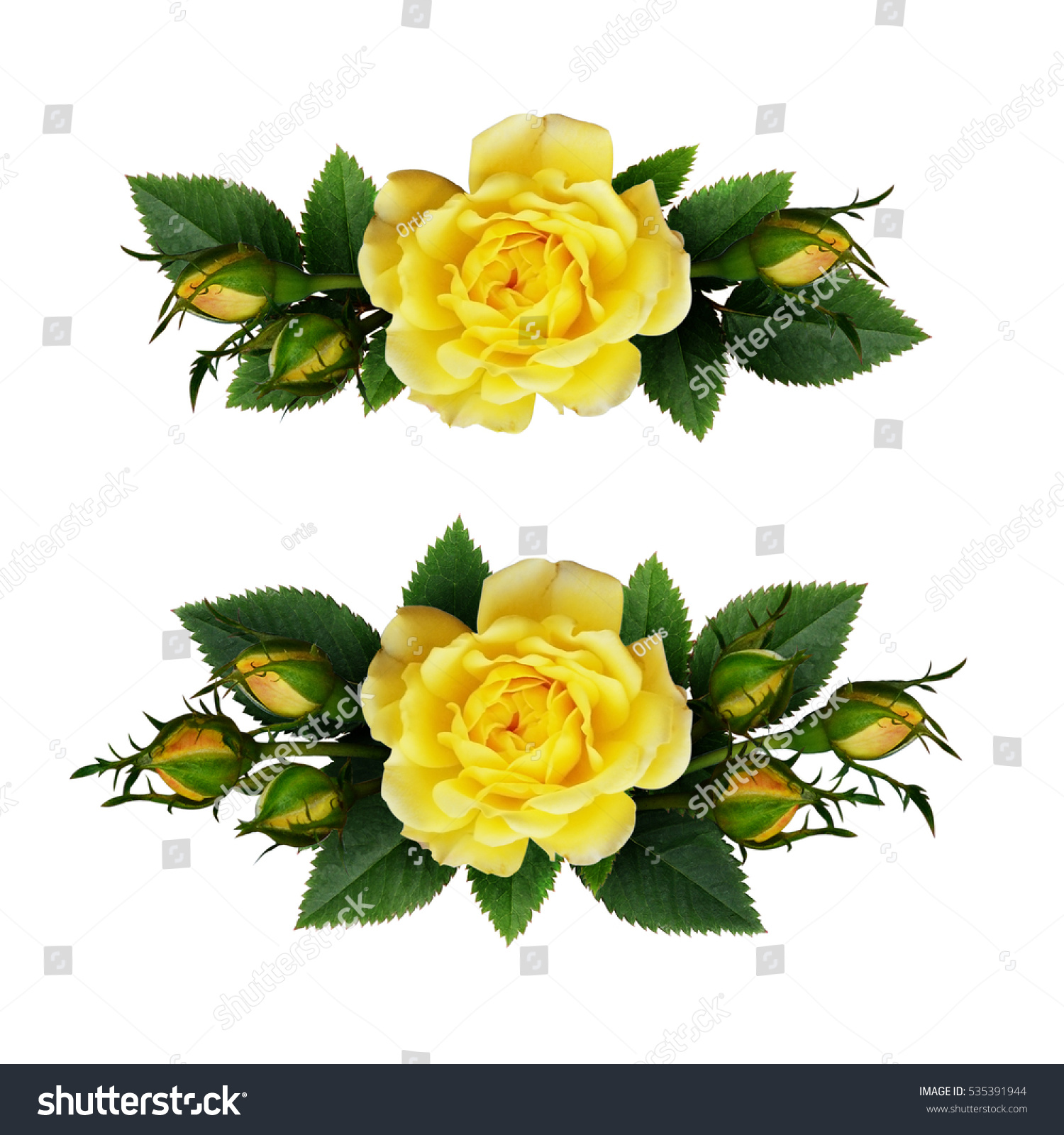 Yellow Rose Flowers Arrangements Isolated On White Ez Canvas