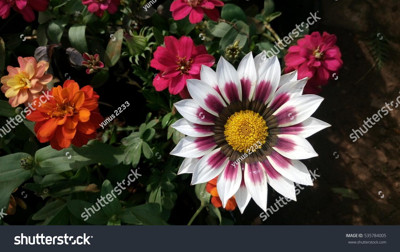 Beautyfull Flowers Stock Photo Edit Now 535784005 Shutterstock