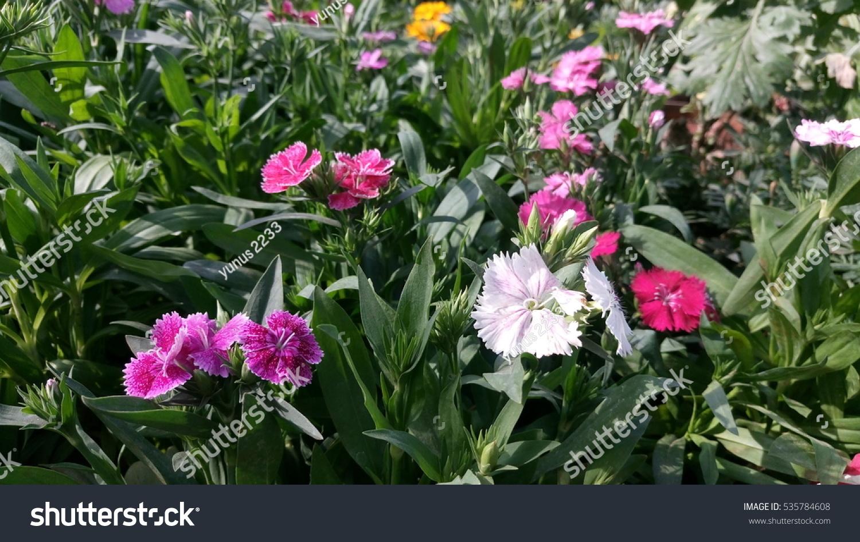 Beautyfull Small Size Flowers Ez Canvas