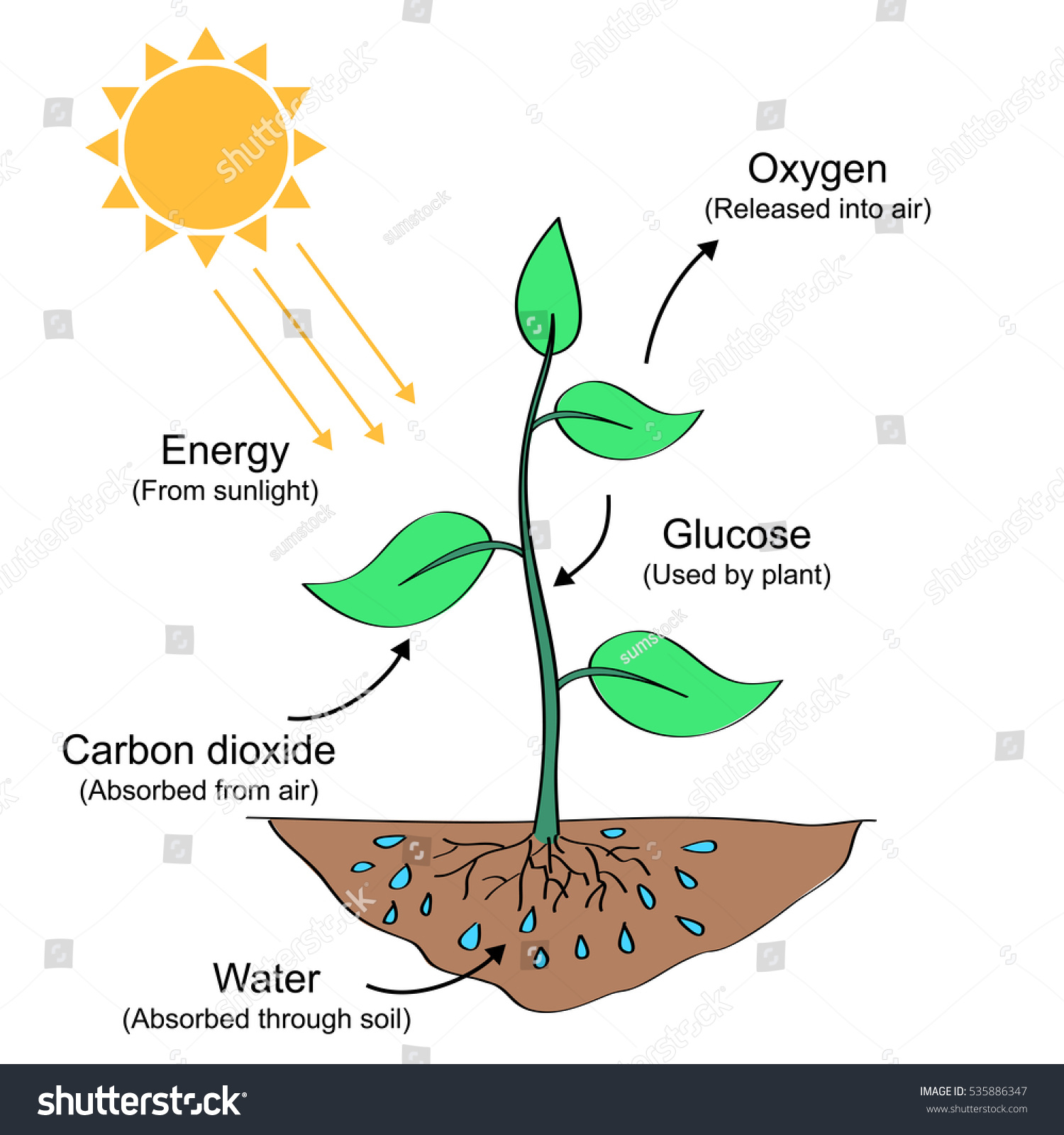 Photosynthesis process labelled illustration stock illustration photosynthesis process labelled illustration pooptronica