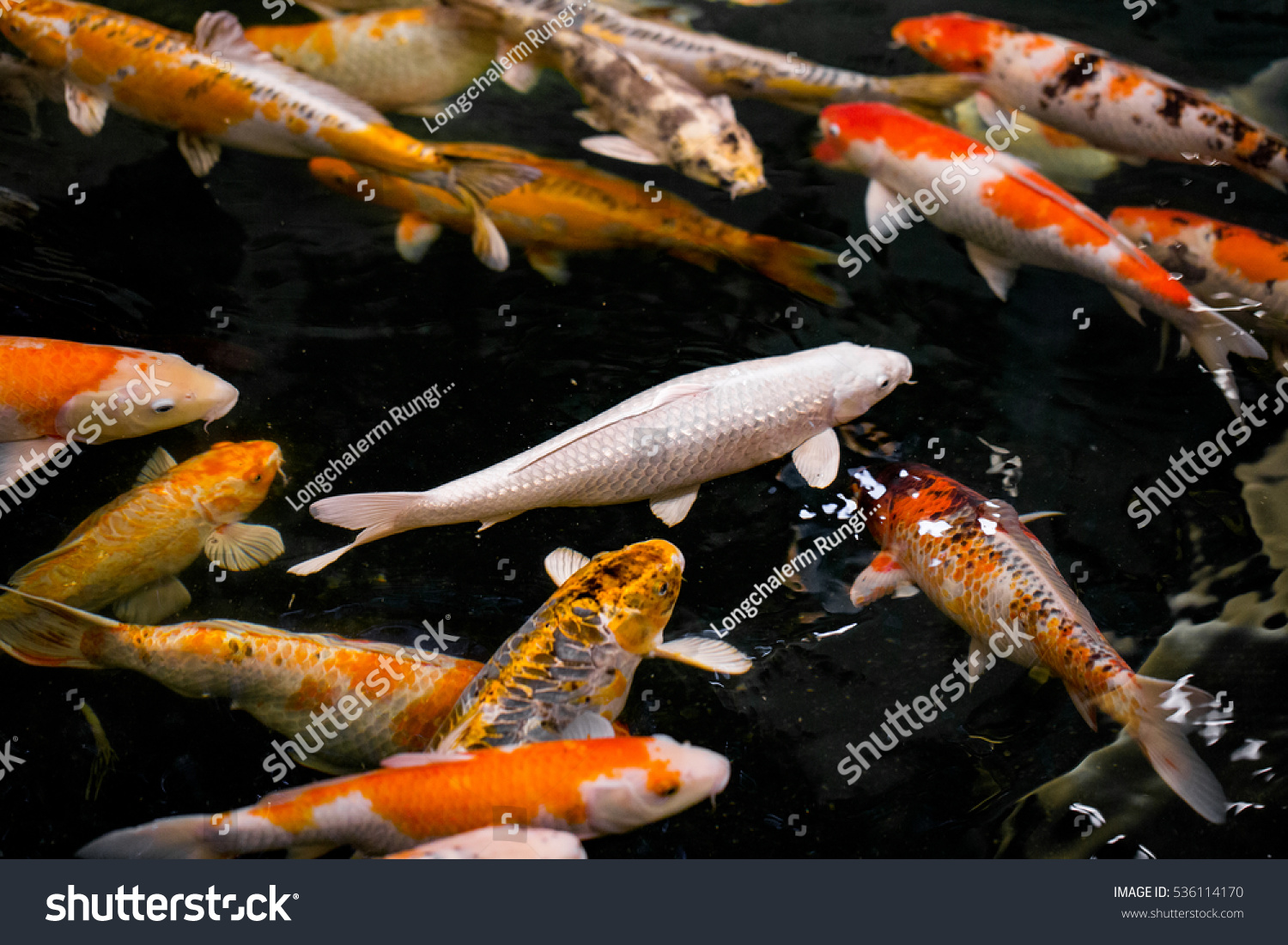 Koi carp japanese big fish stock photo 536114170 for Japanese koi carp fish