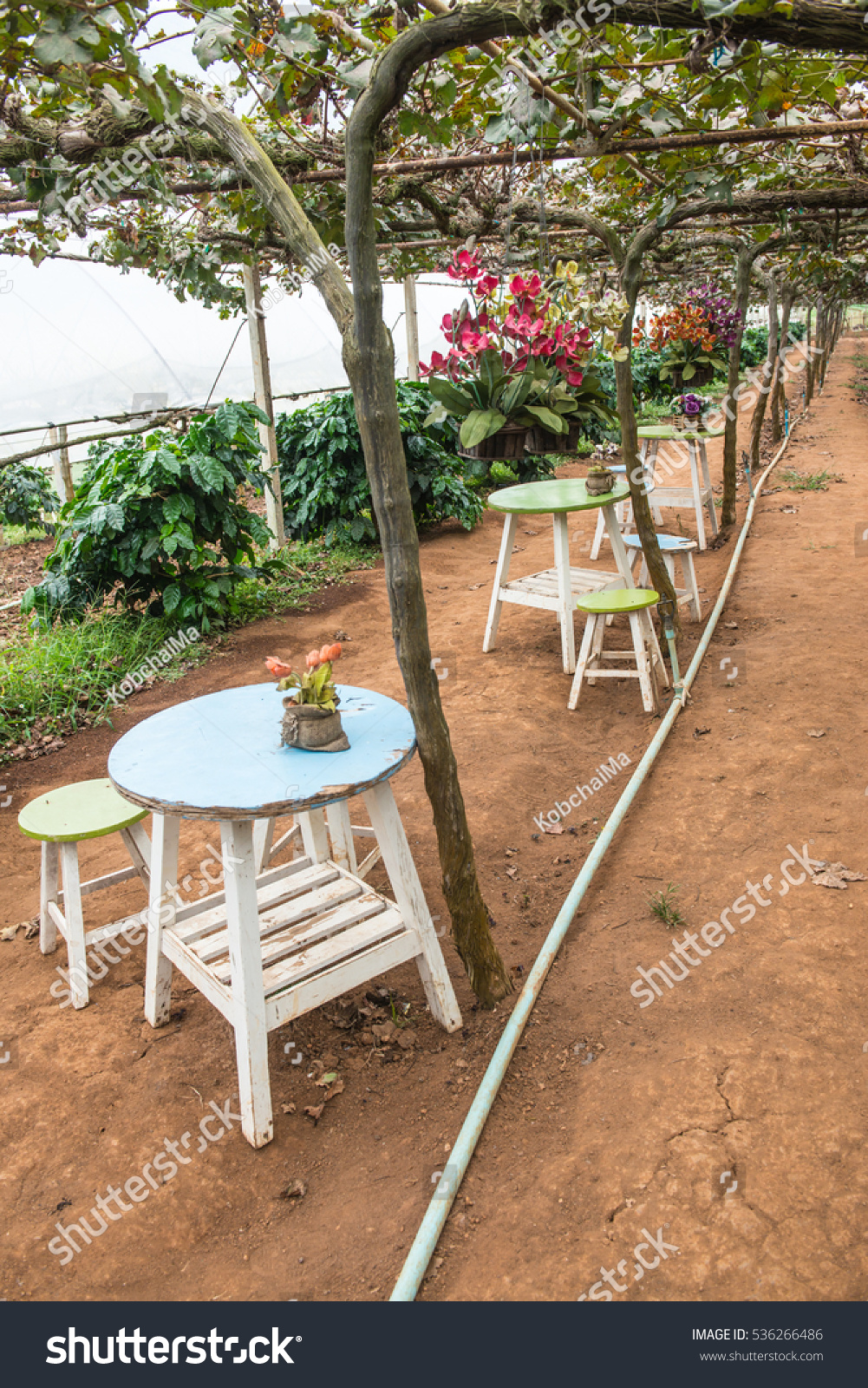 Table set in the grape garden, Thailand | EZ Canvas