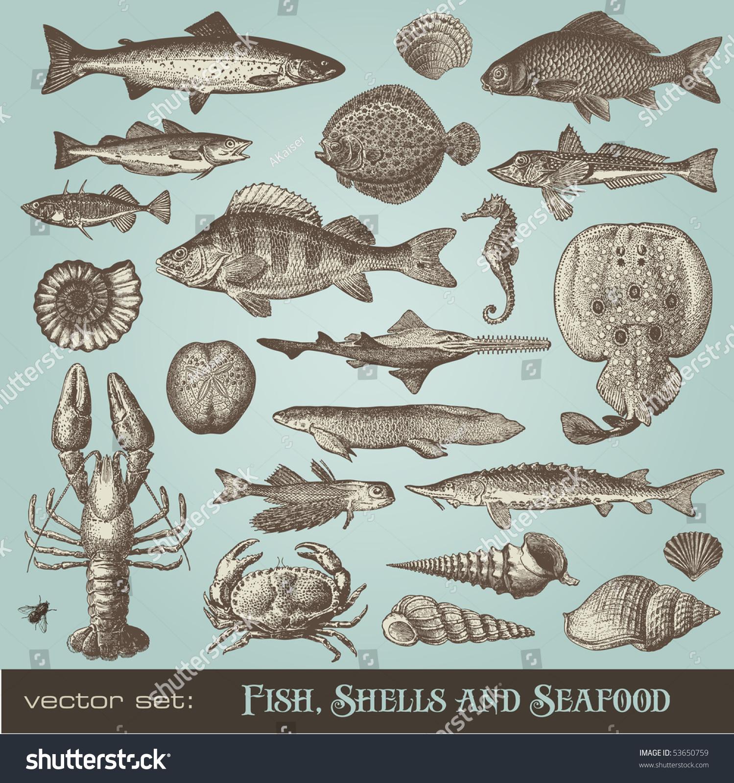 Vector Set Fish Shells Seafood Variety Stock Vector 53650759 ...