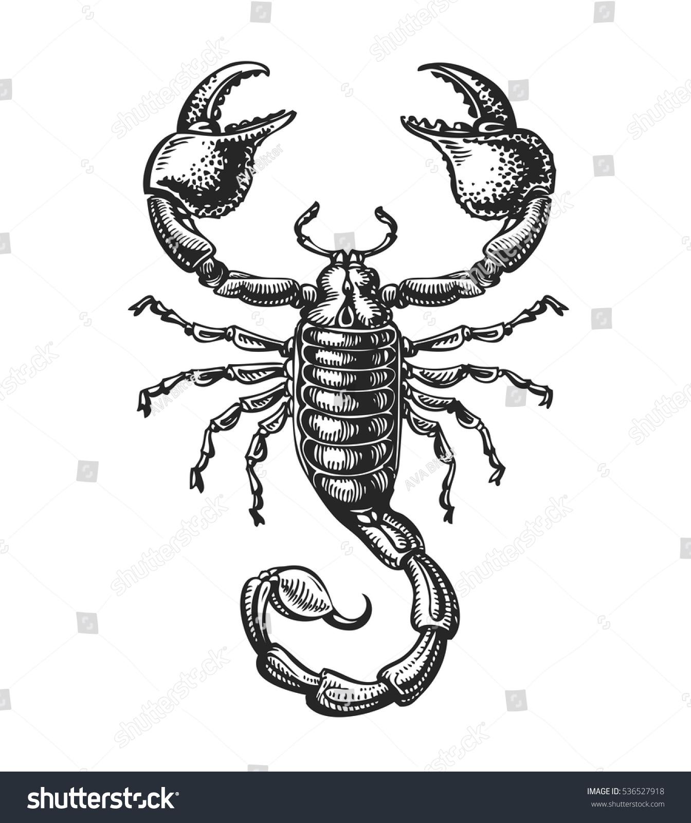 Vintage Venom Tattoo Thoughts: Hand Drawn Sketch Scorpion Tattoo Animal Stock Vector