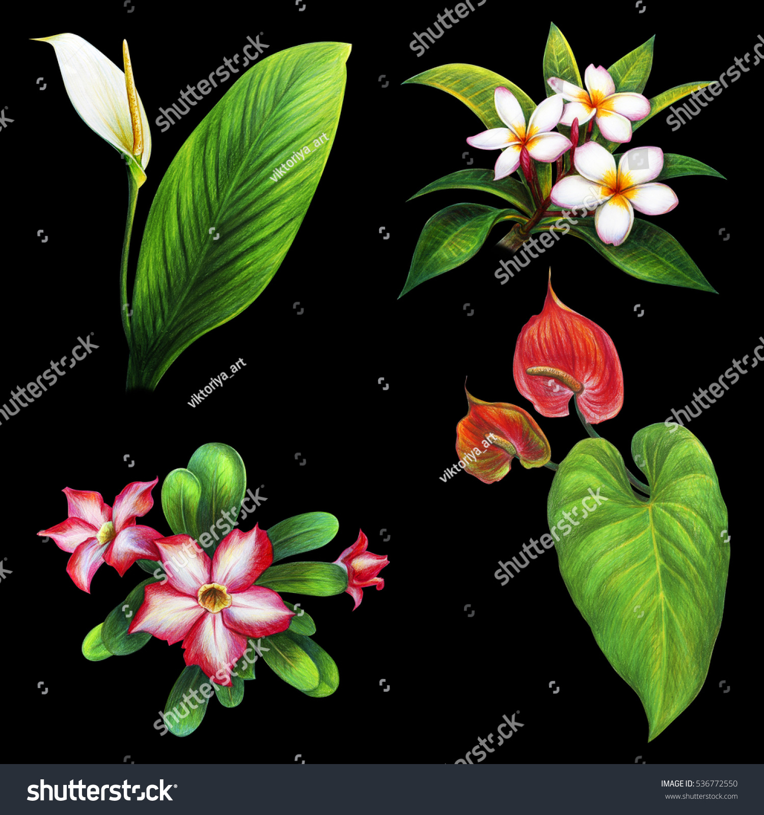 Exotic Plants And Flowers Set On Black Background (Anthurium,Frangipani,  Kalachuchi)