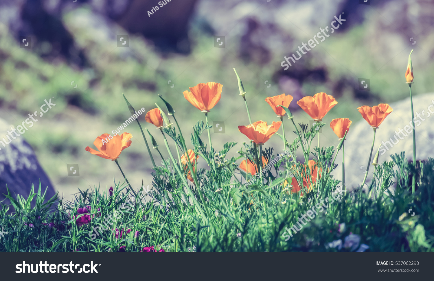 Orange Poppy Flowers Vintage Style Ez Canvas