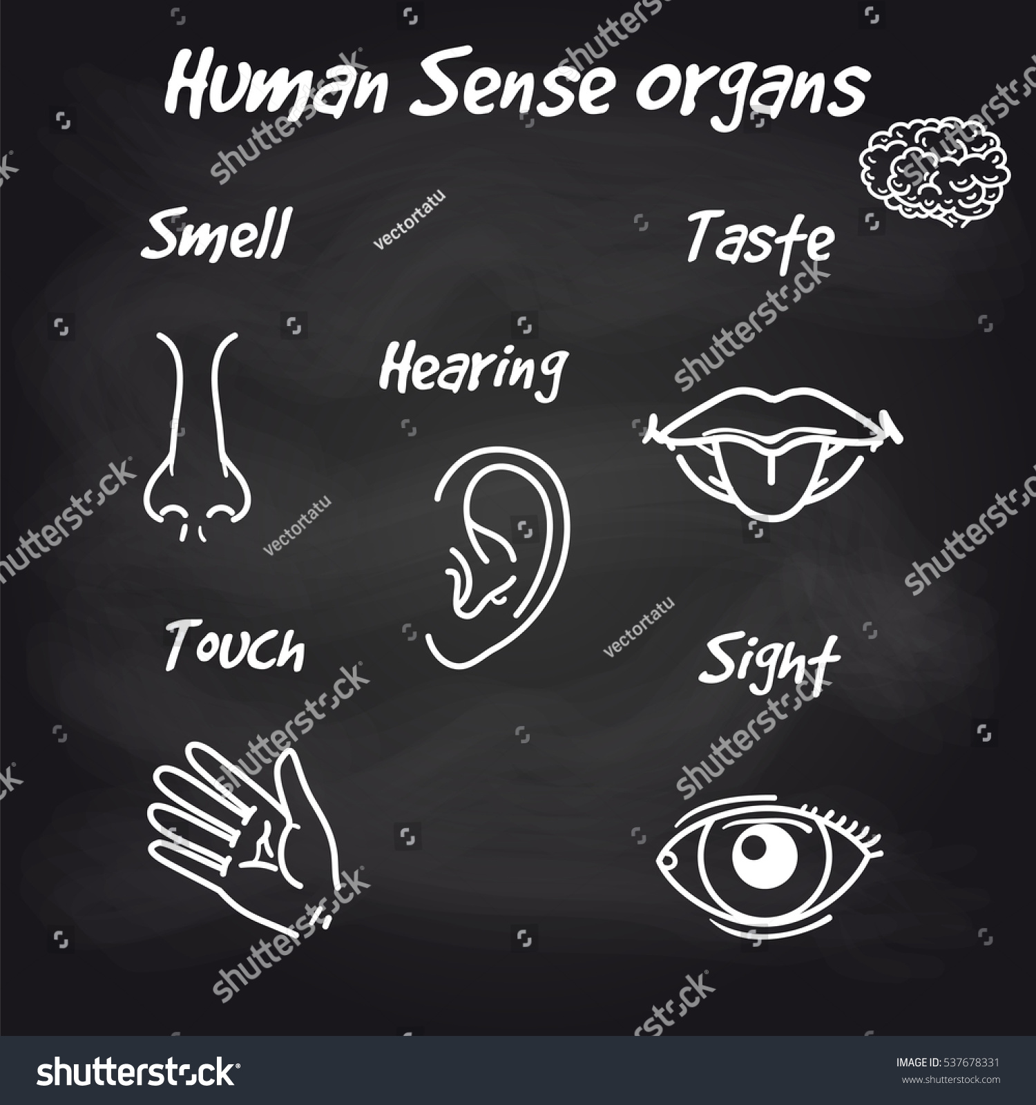 Human Sense Organs Icons On Chalkboard Stock Vector 537678331 ...