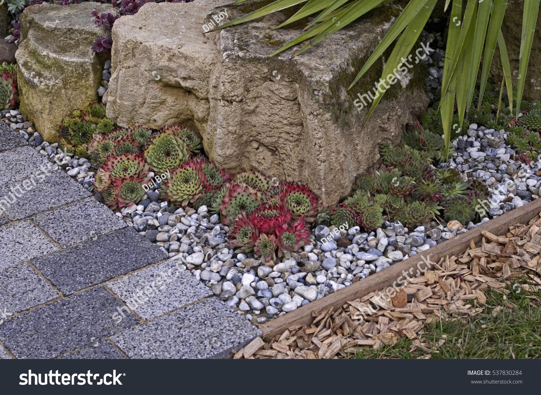 Succulents Growing In A Rock Garden In A Patio Of A Small Contemporary Garden  Design.