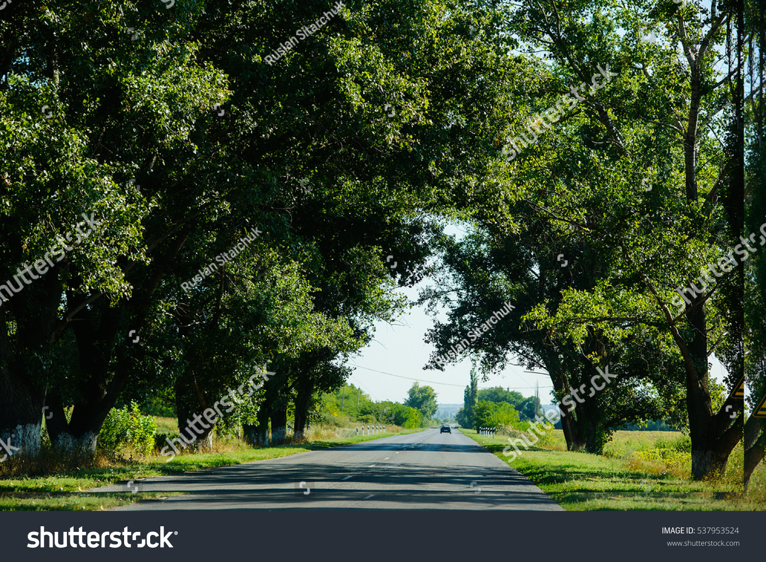 Road Trees Landscape Straight Road Under Stock Photo 537953524 ... for Straight Road With Trees  173lyp