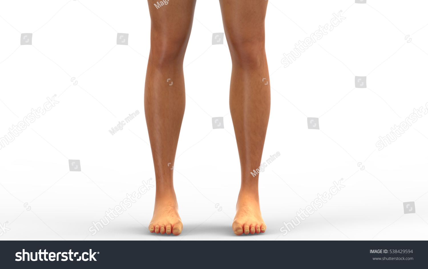 Royalty Free Stock Illustration Of Human Male Muscle Body Anatomy