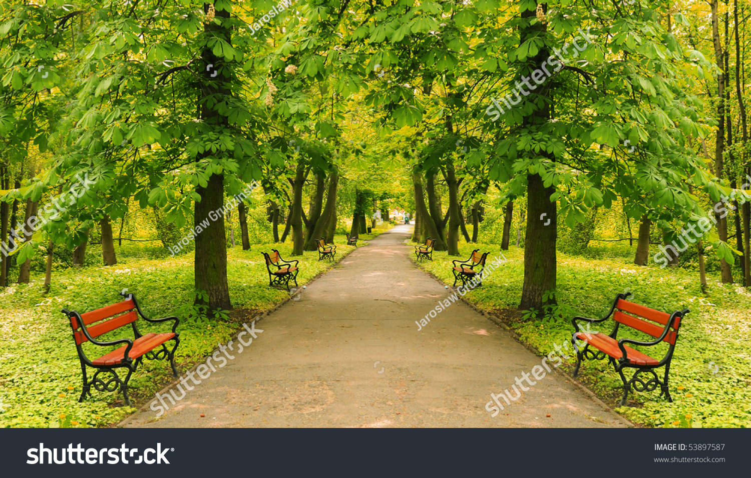 Beautiful Park Alley I...
