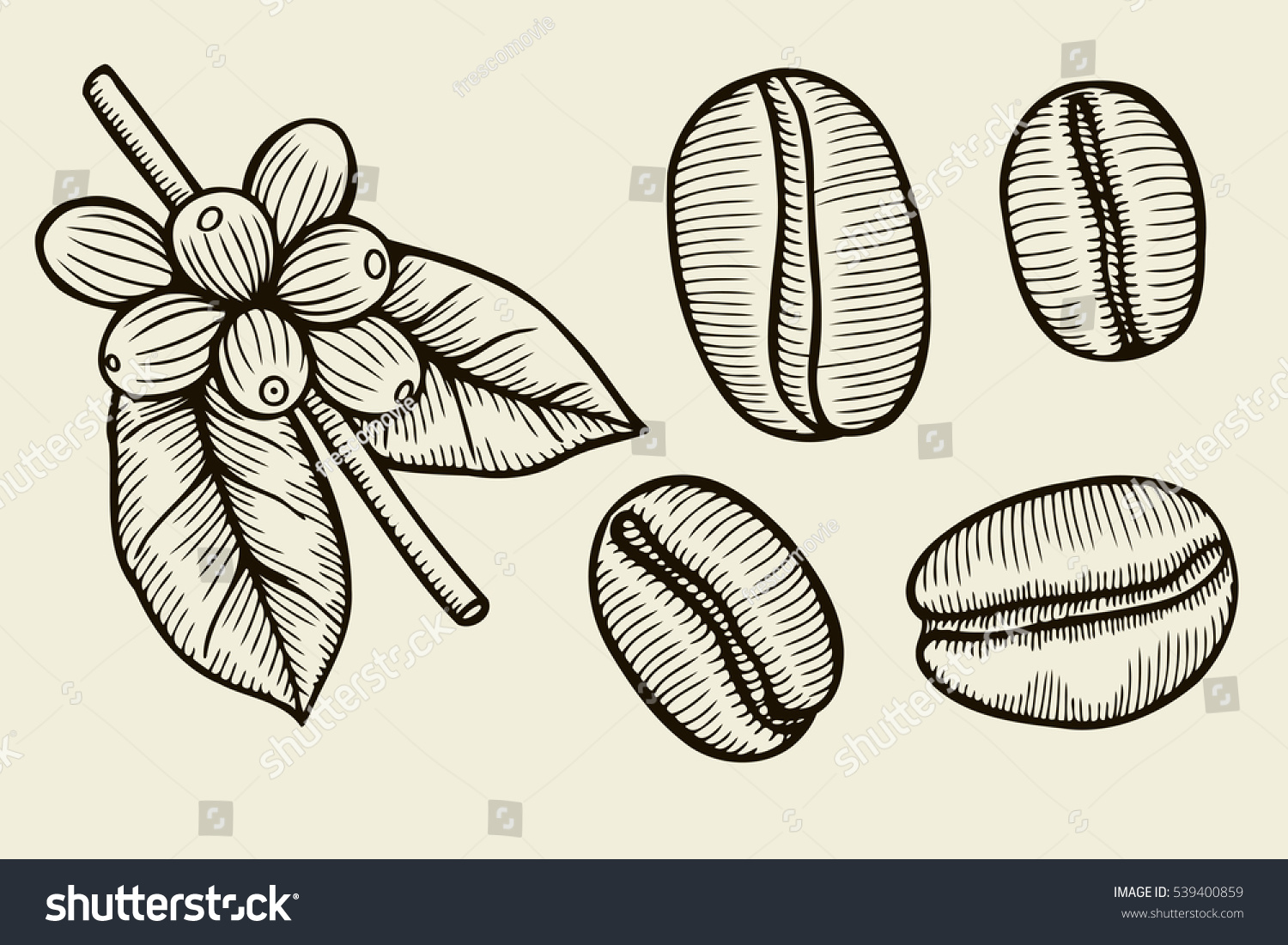 Coffee Plant Branch Leaf Berry Coffee Stock Vector ...