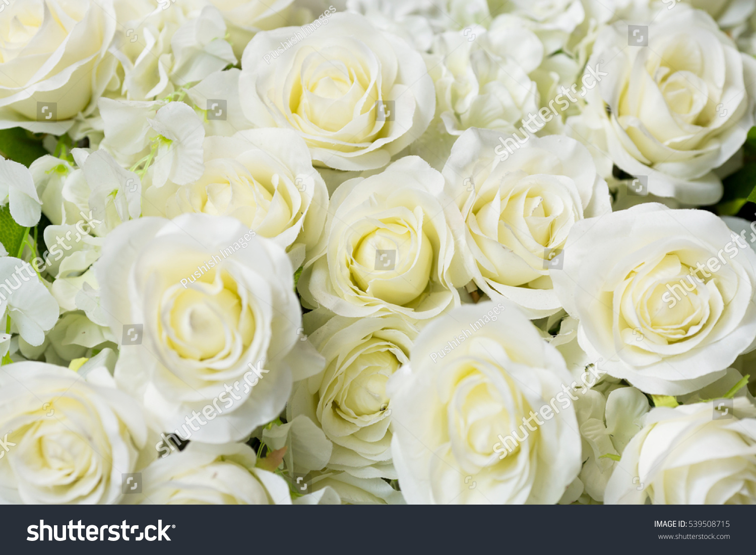 Wedding White Rose Flower Background Stock Photo Edit Now