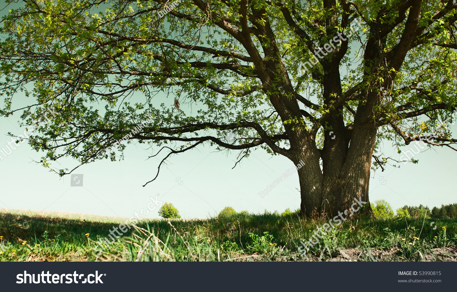 big tree with branches and land with herbs stock photo classic wooden kneeling chair classic wooden chair designs