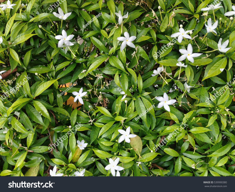 Little White Flowers After The Rain Ez Canvas