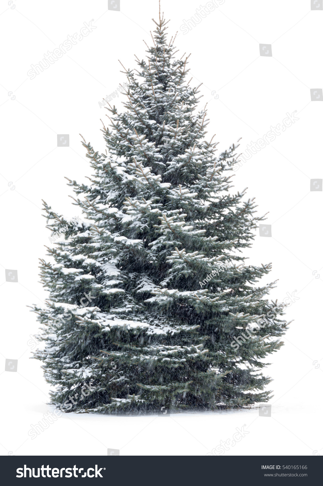 Christmas Tree Snow Isolated Over White Stock Photo Edit Now