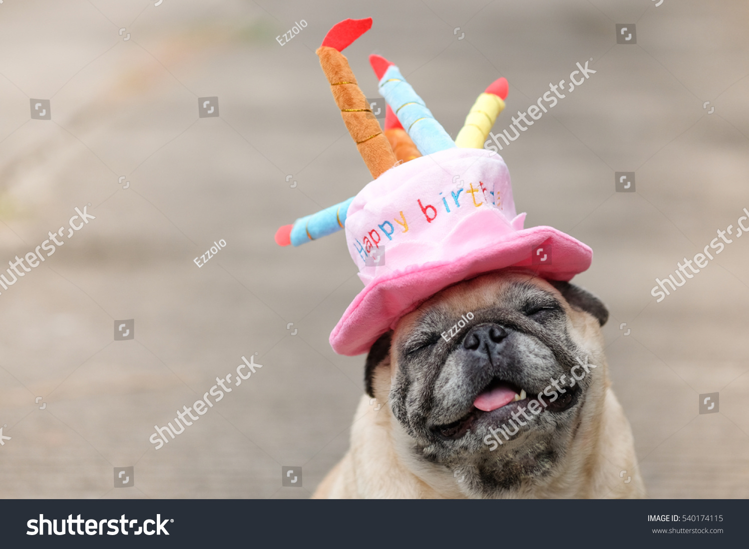 Pug Dog Wearing Pink Happy Birthday Hat With Blurry Background