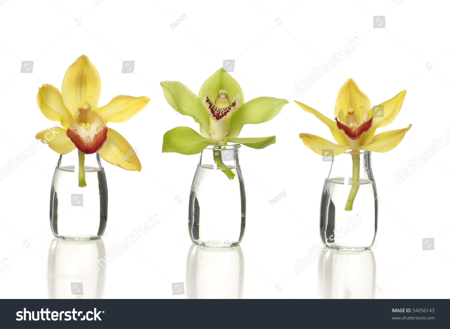 Beauty orchids small glass vases stock photo 54056143 shutterstock beauty orchids in small glass vases reviewsmspy